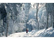 Taunus_Feldberg im Schnee_5422
