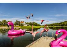 Happy Tammsvik - Sveriges första flamingopark utanför zoo-miljö