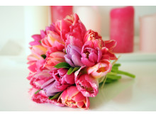 Tulpanbukett i rosa