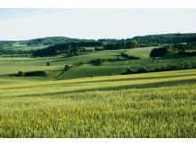 Lantbruk landskap