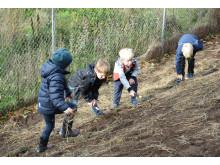 Barna syntes det var gøy å grave i jorda og plante frø for humlene.