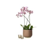 Interflora Kollektion Vår 2019 - Kruka Lauren med Orkide
