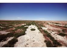 Hyundais prosjekt mot ørkenspredning i Mongolia