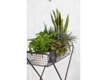 Gröna växter och krukor SS 2017