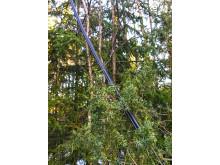 Nedblåsta träd över telefonkabel