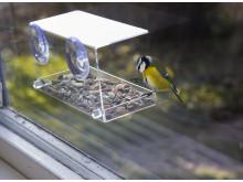 Fönster Fågelmatare