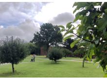 Træer er et vigtigt bidrag til at bekæmpe klodens CO2-aftryk