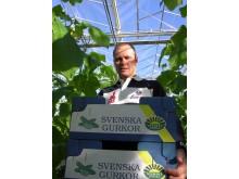 Årets första svenska gurka