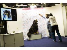 """Tävlingen """"Göteborgs Charmigaste Hund"""" på MyDOG 2014"""