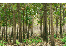 Teakplantagen von Life Forestry