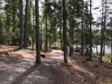 Tyresta National Park  - Ramblers Walking Holidays Cruise & Walk Swedish Waterways