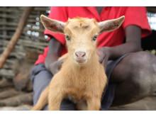 En get till en familj i Zambia - 350 kr