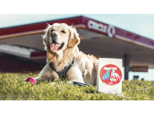 Circle K Doggy Bag