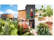 Sommar på Nordic Sea Winery