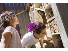 Odla staden - Insektshotell