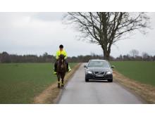 Häst i trafik