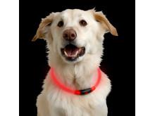 NiteHowl LED Safety hundhalsband med inbyggda dioder