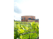 Nordic Sea Winery_Exteriör_Vingården