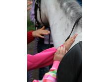 Ett första möte med hästen