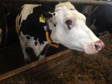 Kuh im Stall_Welttierschutzgesellschaft