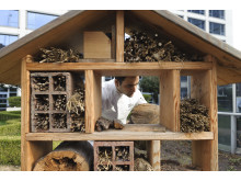 Bee Hotel Fairmont Waterfront
