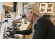 Nathalie Scheers' forskning fokuserar på metaller i maten och tarmen