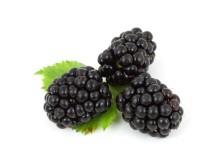 berry-2275_1920