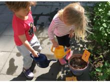 Bin behöver blommor. Vi behöver bin. Hjälp oss att så!