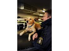 Årets polishund 2018 - Ace