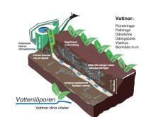 Vattenlöpare beskrivning