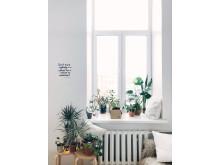Trädkit, fönster