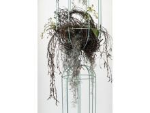 Cacti kokong / hanging baskets, design Anki Gneib