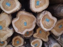 Teakholz von Life Forestry: Hochwertig und wertvoll
