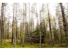 Spridning av aska från biobränsleeldade kraftvärmeverket på Torsvik