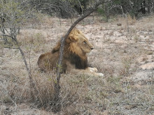 APL i Sydafrika 2