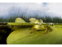 Amphibia – att leva på hoppet. Pressbild 3