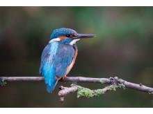 Sony naure kingfisher