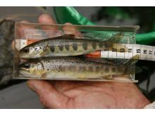 Miljøundersøkelser i kyst og ferskvann