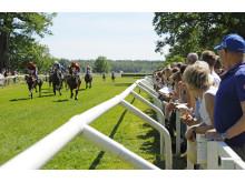 Hästarna på upploppet på Strömsholm