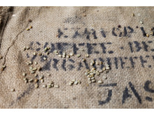Nespresso Explorations Ethiopia Yirgacheffe 3