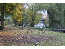 Strömparken behöver nytt gräs