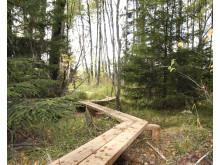 Myternas skog - Träspång