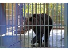 Die ehemalige Unterbringung der Bären in Cherson: kahle Betonböden, keine Beschäftigungsmöglichkeiten.
