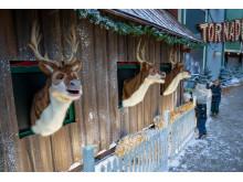 Bakkens tre syngende rensdyr
