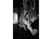 Filmkvällar med diskussion: Oh Deer!