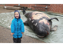 Det er ikke hver dag, at man møder en hval