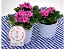 Dagens Rosa Produkt 10 oktober - en Saintpaulia från Mäster Grön