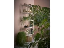 Stora gröna växter