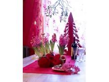 Rosa hyacint med julgran
