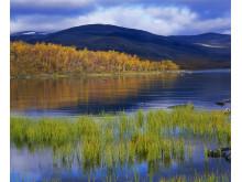 Ruska in the fells of Kilpisjärvi